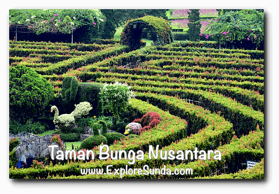 Topiaries in the center of the Labyrinth at Taman Bunga Nusantara in Cipanas, Puncak