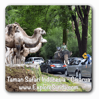 Taman Safari Indonesia in Cisarua, Puncak