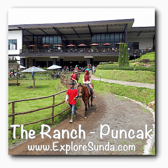 Horse Ride at The Ranch in Cisarua, Puncak