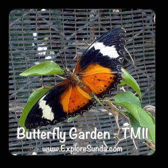 Butterfly Garden at Taman Mini Indonesia Indah - Jakarta.