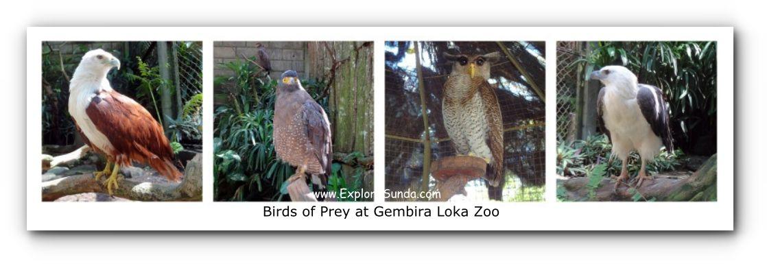 Various Birds of Prey at Gembira Loka Zoo
