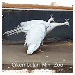 Cikembulan Mini Zoo - Garut, West Java