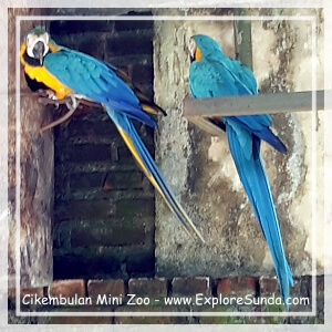 Cikembulan Mini Zoo