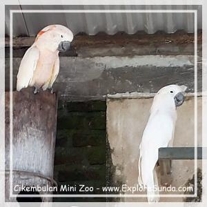 Parrot at Cikembulan Mini Zoo